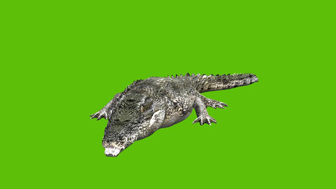 12 animated crocodale viewed from the right with green background Animation
