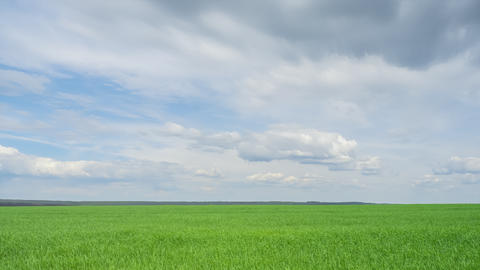timelapse green field with moving clouds. sown field of wheat, the growing of Live Action