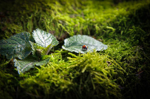 Insect ladybug sitting on a leaf on a stump covered with green moss フォト