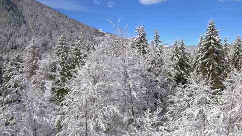 Aerial - Winter fairytale of delicate snow covered trees on a sunny day Footage