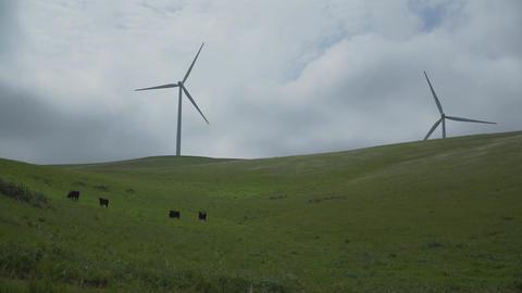 Cattle graze in a Californian wind farm Footage