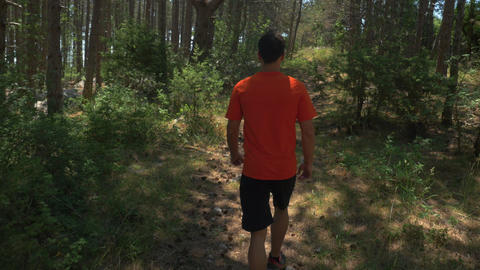 Rear View Of Young Man Walking On Forest Path stock footage