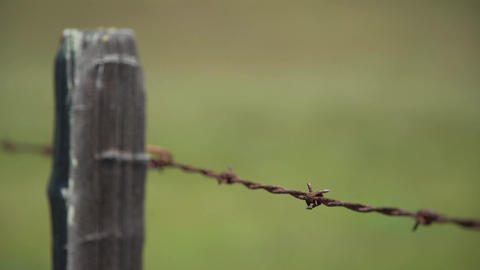 Shallow DOF shot of a barbed wire fence Footage