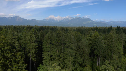 Aerial - Huge forest area beneath distant mountains Footage