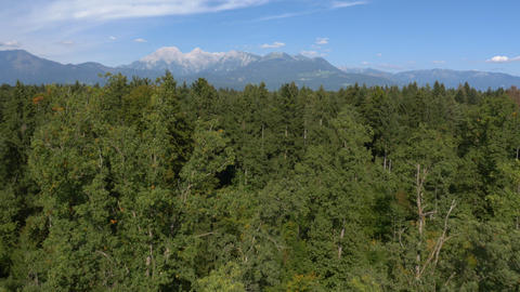 Aerial - View of huge forest area beneath distant mountains Live Action