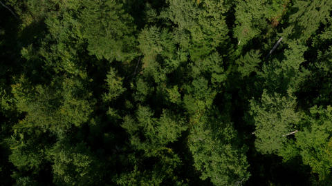 Aerial, vertical - Lush, green forest Live Action