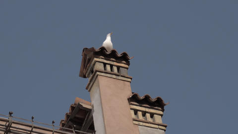 A slow motion of a seagull sitting on an old Venice chimney Footage
