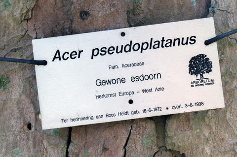 Sign Of A Acer Pseudoplatanus Tree At De Nieuwe Ooster At Amsterdam The Netherlands 2019 フォト