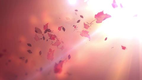 Autumn Leaf Background 03 Animation