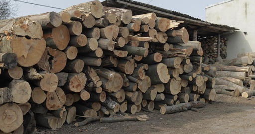 Timber logging. Freshly cut tree wooden logs piled up. Wood storage for industry Live Action
