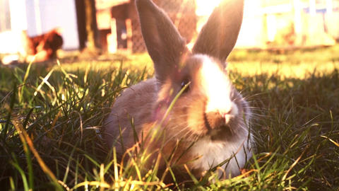 Easter white bunny sitting in the grass Live Action