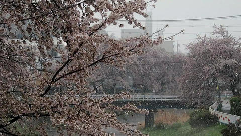 Spring snow in Japan Footage
