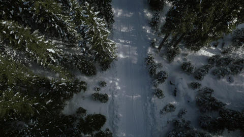 Aerial, vertical - Empty, snowy road in forest Live Action