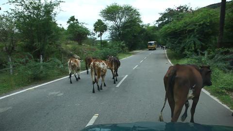 Cows art rural area Footage