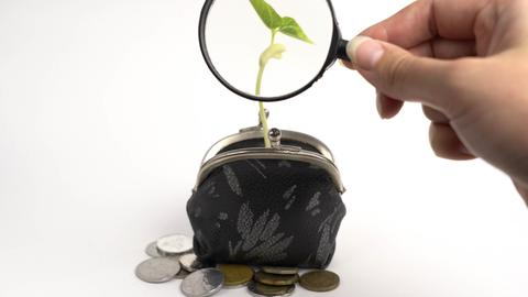 Plant growing from purse, money business finance bank growth concept, isolated