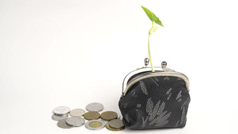Money business finance bank concept, purse with growing plant, money tree growth Footage