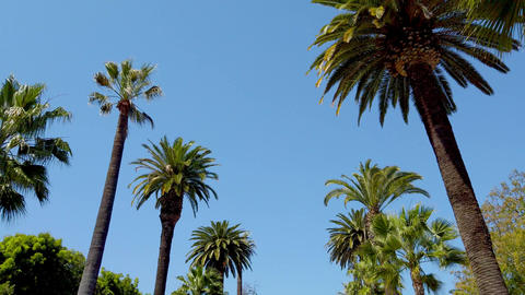 The Palm trees of Beverly Hills - travel photography Live Action