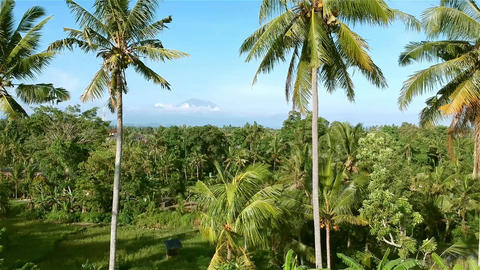 View of Ubud Bali from the sky! Live Action
