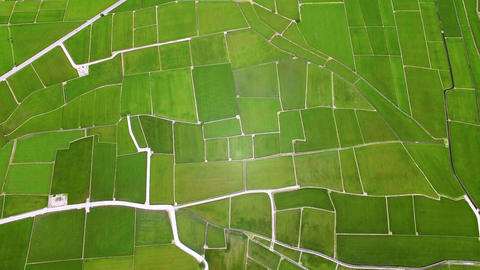Aerial view of rice fields. Chishang. Taiwan Archivo