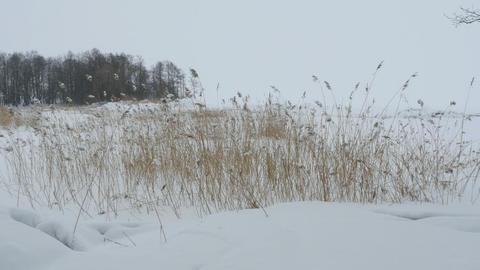Lakeside winter landscape Footage