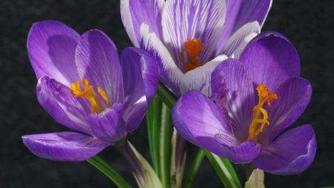 Flowering beautiful flowers Footage
