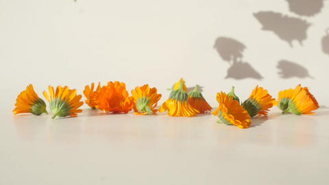 Calendula heads falling on the table Live Action