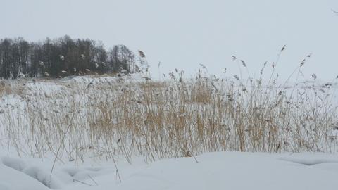 Lakeside winter landscape panorama Footage