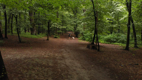 Sportive blond man running with a dog along a wide way in forest Live Action