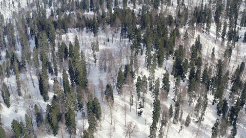 Snowy highlands covered winter forest drone view. Aerial landscape winter trees in snowy mountain Live Action