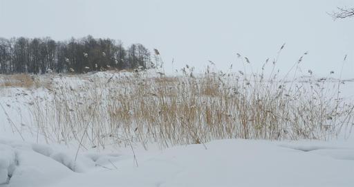 snowbound winter landscape Footage