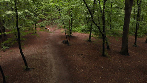 Sportive blond man running from a low start with a dog in a forest Live Action