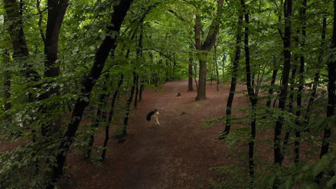 Sportive man doing bent forward exercise with a dog in a forest Live Action