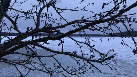 Forest Winter Frozen Lake Footage