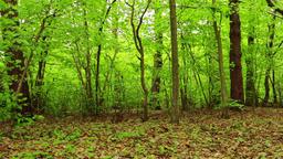 Spring summer forest Footage