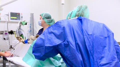 Panning shot of Veterinarian surgical team operating a dog at animal hospital ビデオ