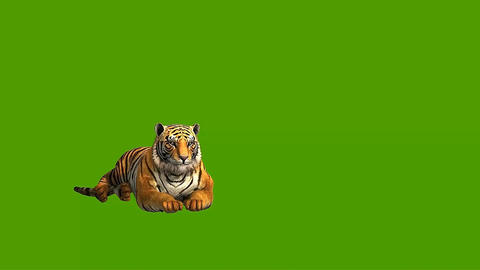 [alt video] 07 3D animated tiger on a green screen