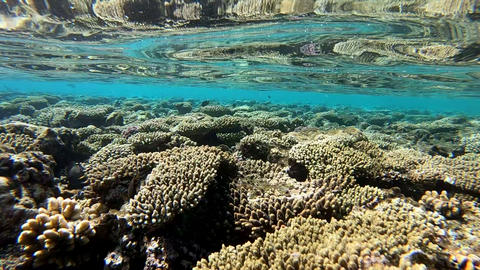 Underwater ecosystem of the Red Sea, beautiful coral reef, slow motion Footage
