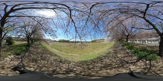 Sakura VR 360° Video
