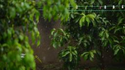 Rain fall close up Footage