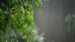 Heavy rain on a tree Footage