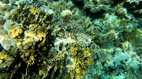 Deep under water view of coral reef, lit by sunlight, slow motion Footage