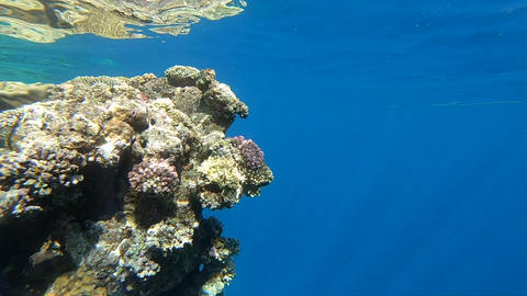 Amazing coral reef is deep under water, lit by sunlight, slow motion Footage