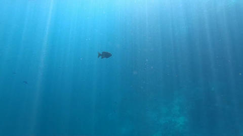Blue sea water with fishes, that is penetrated by the sun's rays. Action in Sea Live Action