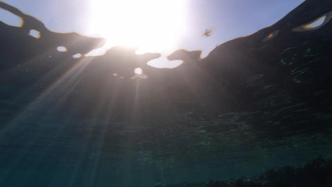 Sunshine, view from the bottom of the Red sea, slow motion Footage