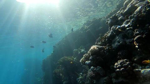 Beautiful sunlight penetrates the water and illuminates the coral reef with fish Footage