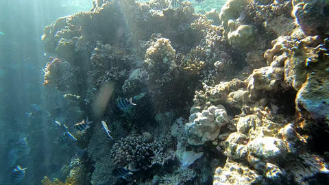 The sun's rays illuminate the coral reef underwater, slow motion Footage