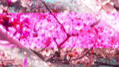 桜base CG動画素材