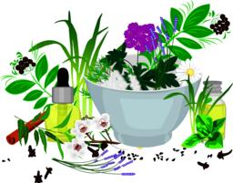 Essential oils and herbs ベクター