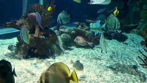 Aquarium Archivo