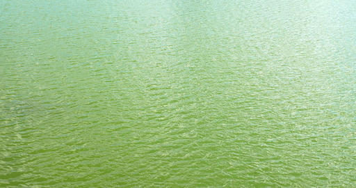 Calm Green Water Lake With Small Waves Live Action